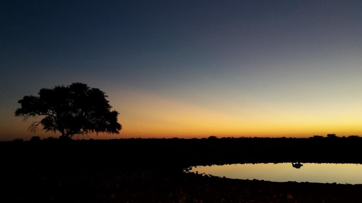 Nashorn im Sonnenuntergang am Wasserloch - Handybild der Woche
